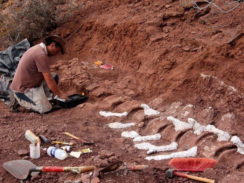 阿根廷发现泰坦龙化石 或是有史以来最大的陆生生物