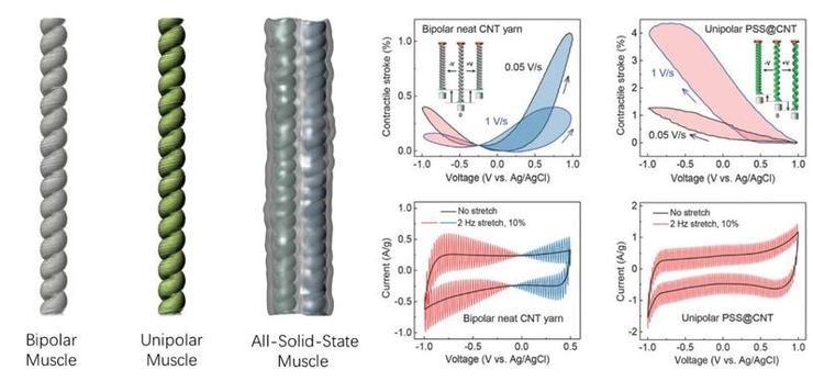 人工肌肉性能实现新突破 碳纳米管纱线为何物