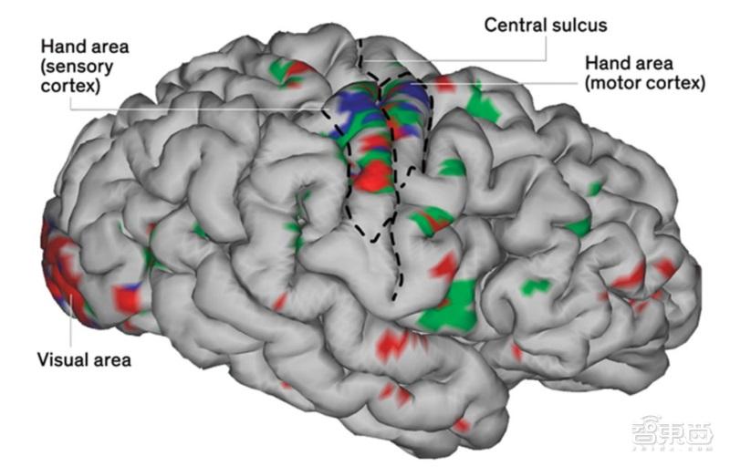 美国科学家研发出人造神经系统 可帮瘫患者恢复运动和触觉