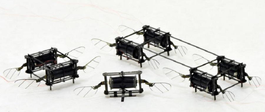 "MIT研发新型""昆虫""无人机 碰撞、翻滚也能迅速恢复飞行"