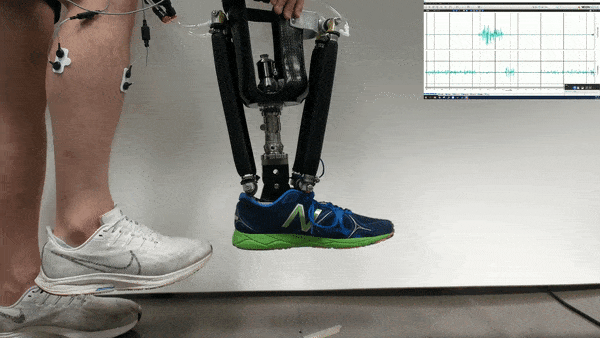科学家开发出可行走机器人 通过神经信号控制假肢