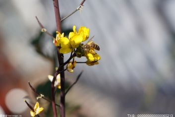杭州植物园迎来今年园内第一抹桂花香